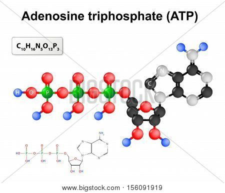 Adenosine triphosphate. Structural formula and chemical formula and molecular model of ATP.
