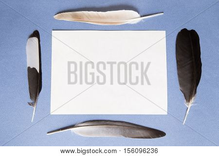 Feathers and a sheet of paper on a blue background