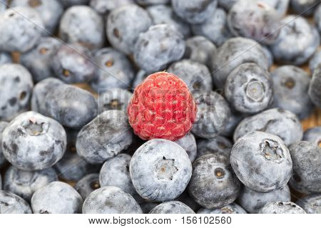 large ripe blueberries, lying in a heap after harvest. Photo taken closeup. on berries is a red raspberry