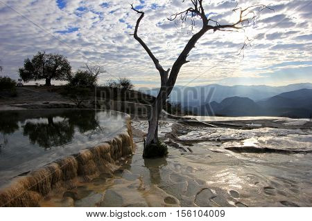 Pool and tree at petrified waterfalls, Hierve El Agua, Oaxaca Mexico
