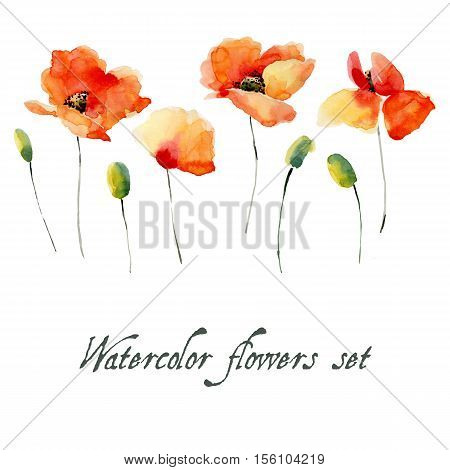 Set of watercolor poppy flowers on a white background. Background for your design and decor.