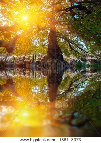 Big tree silhouette and nature green wood sunlight background. Beautiful scenery in Turky, Asia