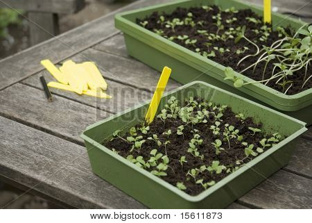 seeds sowing
