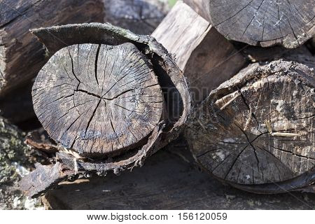 old rotting logs lying outdoors Photo closeup, shallow depth of field