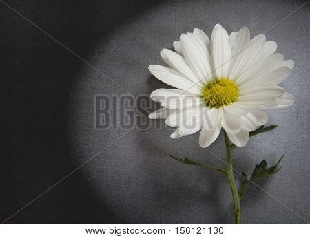 White flower in detail on dark background - condolence card