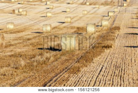 Agricultural field on which stacked straw haystacks after the wheat harvest, defocus