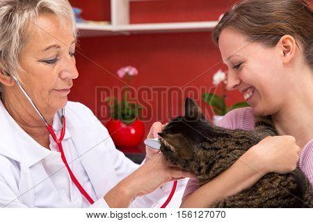 Female Vet Examines A Cat