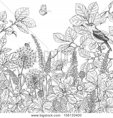 Hand drawn floral elements. Black and white flowers plants butterfly and sitting songbird on branch. Monochrome vector sketch.