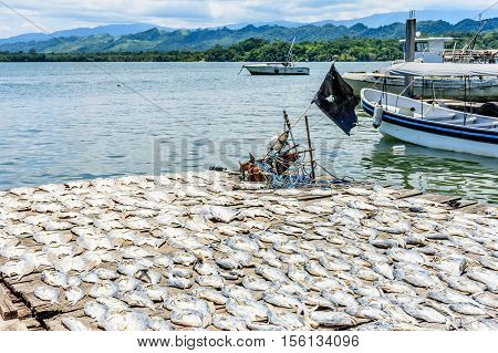 Fishing boats at anchor near fish drying in sun on wooden dock by river estuary of Rio Dulce in Caribbean town of Livingston, Guatemala