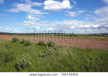 Nature landscape with green field and forest far away in sunny summer day. Horizontal view