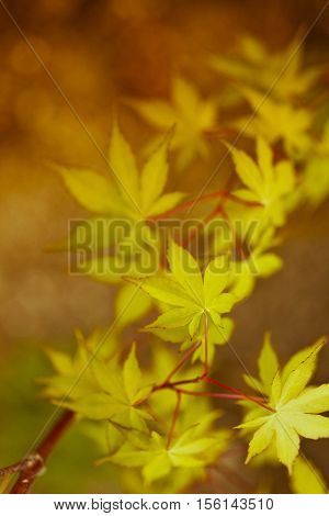 Autumn Leaves Nature Background