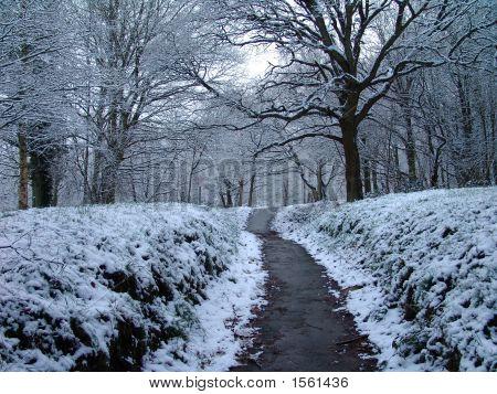 Snowy Path Through Forest