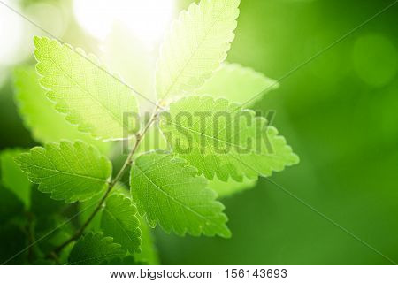 Summer nature background with fresh green leaves