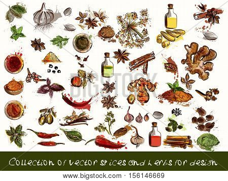 A collection of vector spices and herbs chili vanilla curry mint dill parsley anise and many other in engraved and watercolor styles
