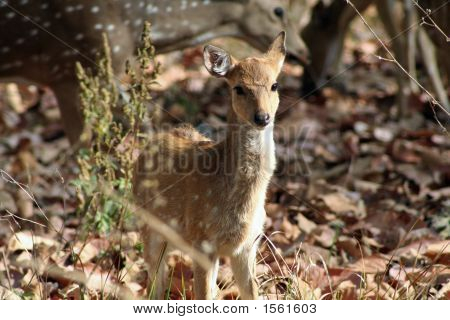 Calf of deer. cute deer. confused
