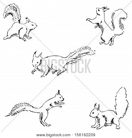 Squirrels in different positions. Pencil sketch by hand. Vector image