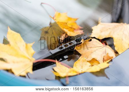 season and transport concept - close up of car wiper with autumn maple leaves on windshield