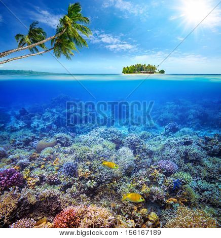 Beautiful Coral reef with fish on the background of a small island. Maldives