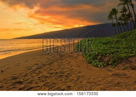 Beach and palms trees at sunset at Sugar Beach Kihei Maui Hawaii USA