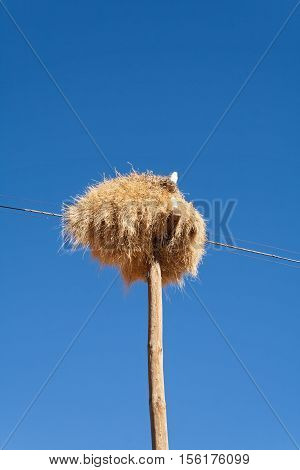 Weaver bird nest on an old Utility pole on the roadside in Namibia