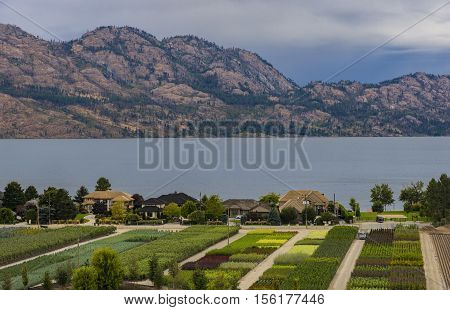 Tree Nursery overlooking a subdivision Okanagan Lake Kelowna British Columbia Canada in the summer