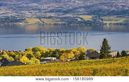 Vineyard overlooking a subdivision Okanagan Lake Kelowna British Columbia Canada in the fall