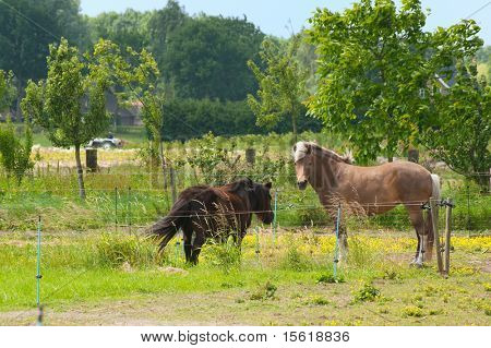 Horse and pony together in farmland poster