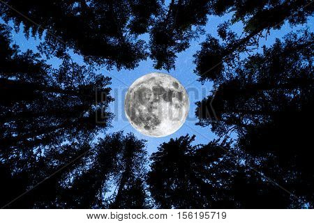 Super Moon Pine Trees Silhouette