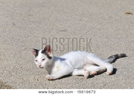Little Greek cat suffering from a disease at the eyes poster