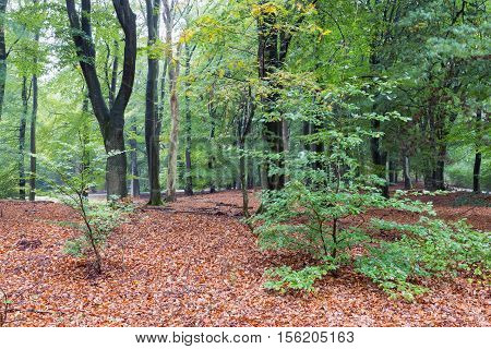 Dutch National Park Veluwe with trees in autumn colors