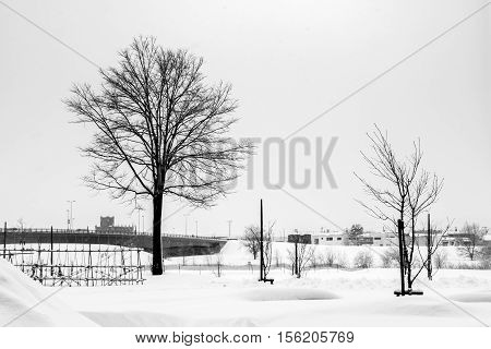 One Tree Silhouette Among Snow Rual Landscape.