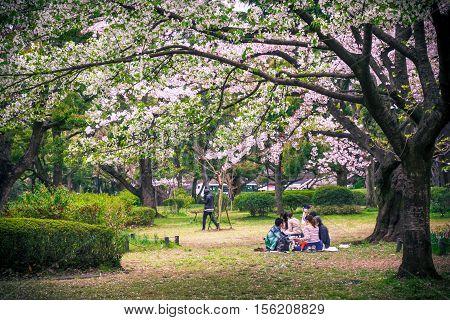 Sakura Tree In Park
