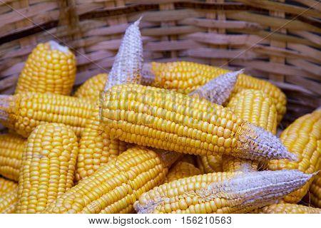 Ripe dried corn cobs,corn seeds make it dry.