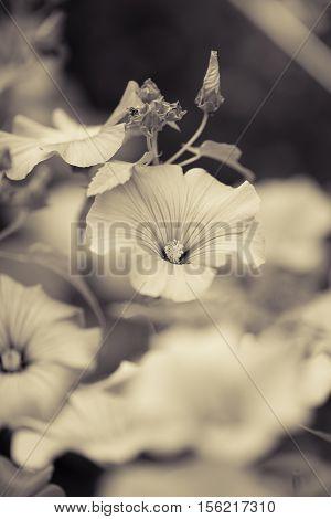 Summer Flowers. Gray Garden Background. Outdoor Shot.