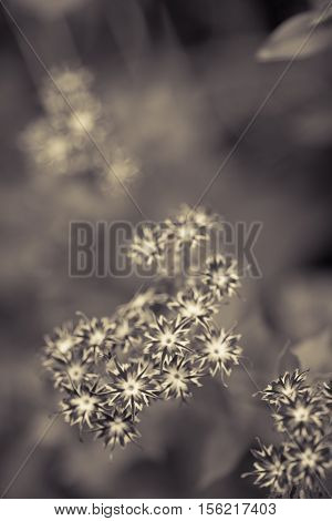 Summer Flowers. Gray Garden Background. Outdoor Shot.