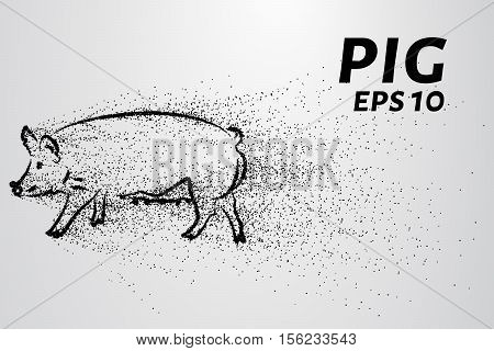 Pig of the particles. Pig consists of circles and points.