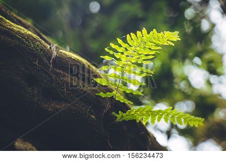 Fern Frond, Tropical Green Leafs Nature Background
