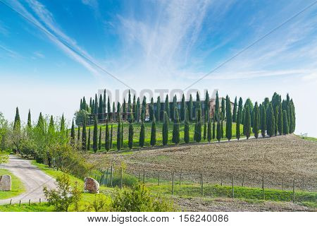 row of cypresses in Val d'Orcia Italy