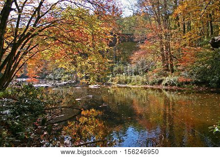 colorful autumn foliage is reflected in the water of a stream