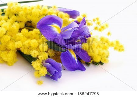 irises and mimosa flowers over white background