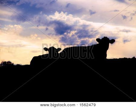 Silhoutette Of Two Cows
