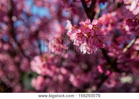 A photo of pink flowers in bloom