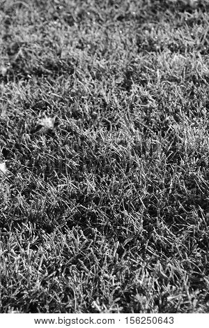 Frosted textured grass in black and white, Photoshop