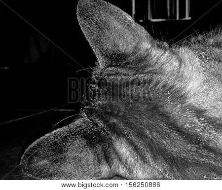 Gato de espaldas en blanco y negro