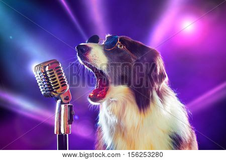 Rockstar border collie dog singing into a microphone