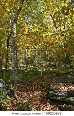 a trail covered with fallen autumn leaves meanders between rocks and trees