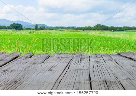Beautiful summer green field with blue sky with and wooden planks