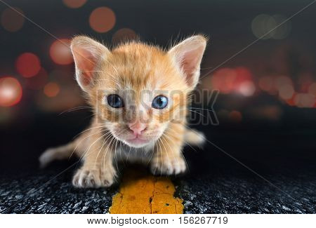 A Lonely Little Cat On Road abstract