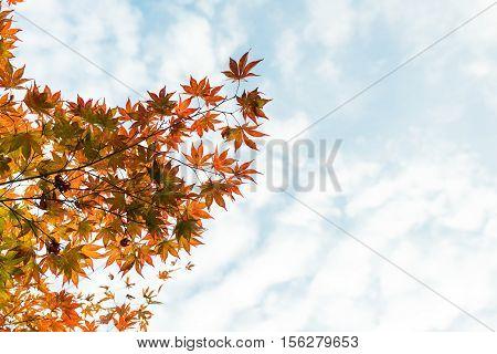 Fall. Autumn maple leaves and autumn sky