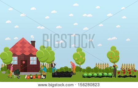 Gardeners working in the garden, digging the garden using shovel and planting cabbage, tomatoes and flowers. Oranges and pears on trees. Horticulture, agriculture. Flat design vector banner